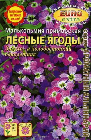 2485_malkolmia_lesnye_jagody