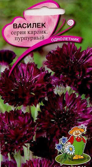 4164_vasilek_purpurni