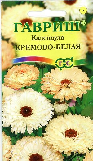 9817_kalendula_kremovo_belaja