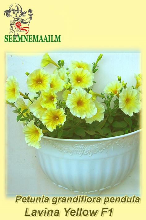 14130_Petunia_Lavina_Yellow