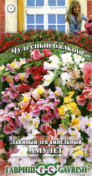13687_lviny_zev_amulet