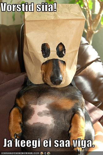 Vorstiröövel koer